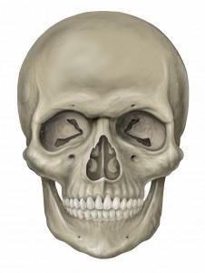 Head_skull_anterior_view[1]