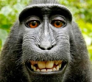 monkey_selfie_contentfullwidth[1]