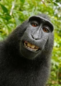 selfie_1.jpg.CROP.promovar-mediumlarge[1]